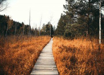 Pieseň Pútnikov – Poslušnosť