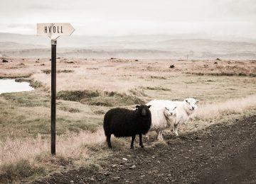 Ján Máhrik: Co s černými ovcemi v našem stádu?